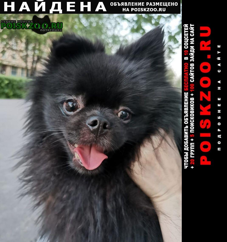 Найдена собака кобель в районе м.профсоюзная Москва