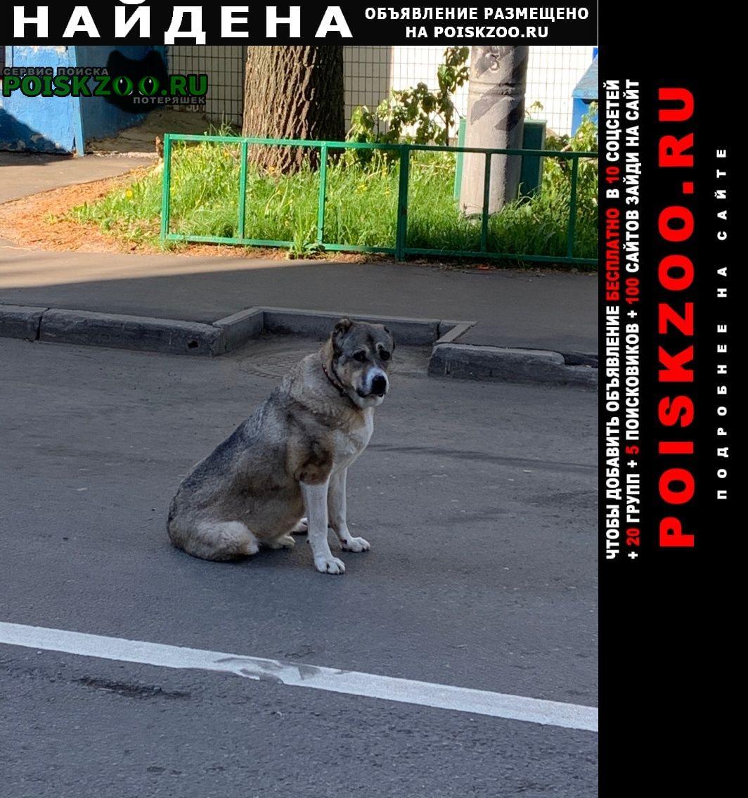 Найдена собака, р-н свиблово, алабай маша Москва
