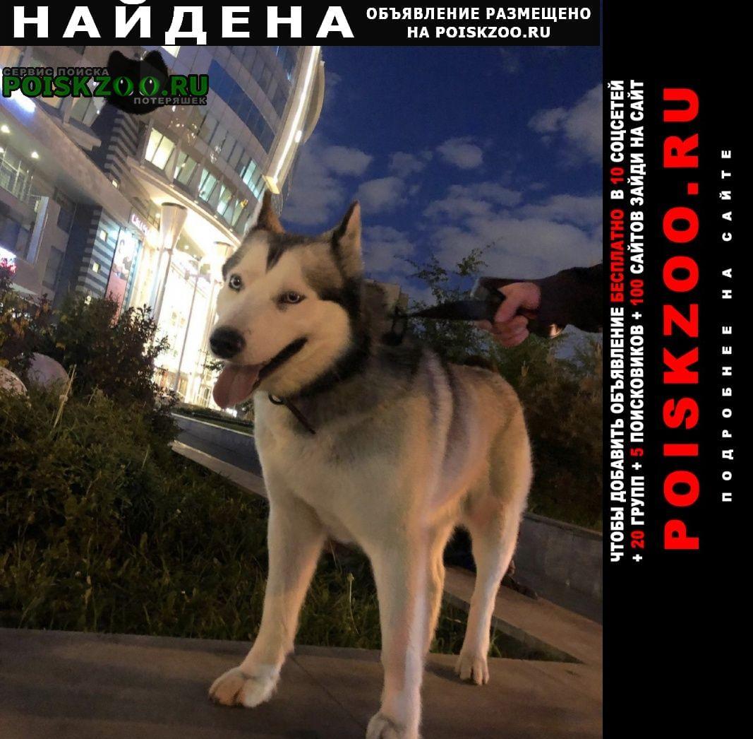 Найдена собака хаски Москва
