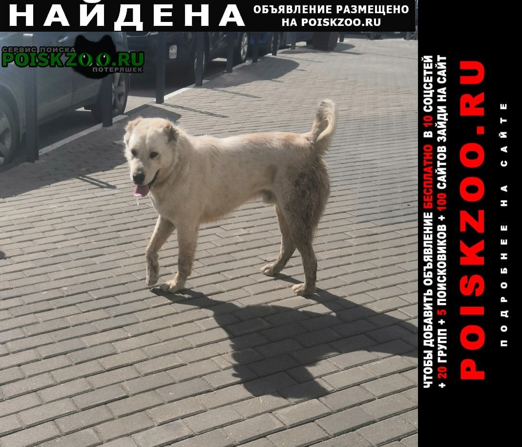 Найдена собака кобель белый алабай Москва