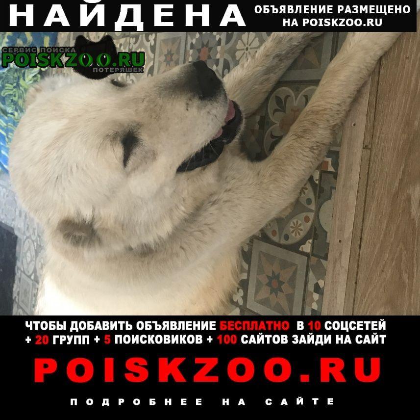 Найдена собака кобель алабай Москва