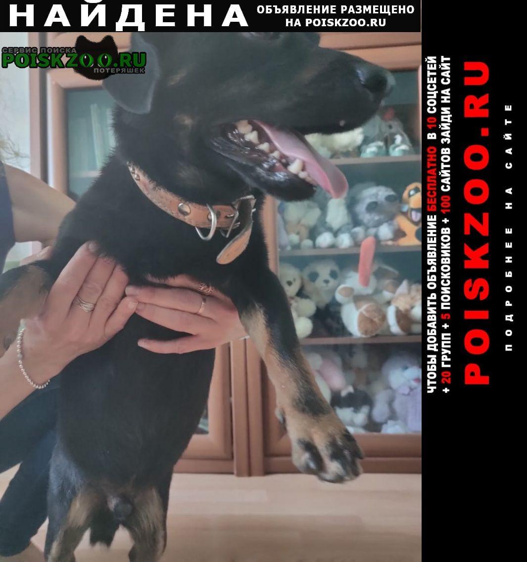 Найдена собака кобель Голицыно (Московская обл.)