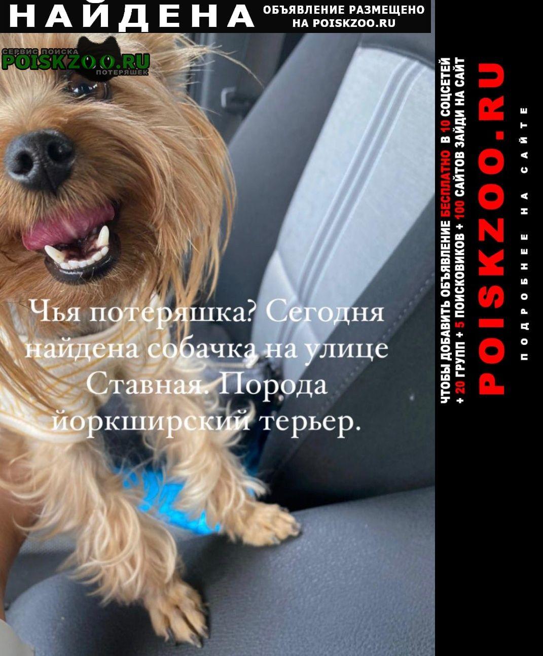 Найдена собака Энгельс