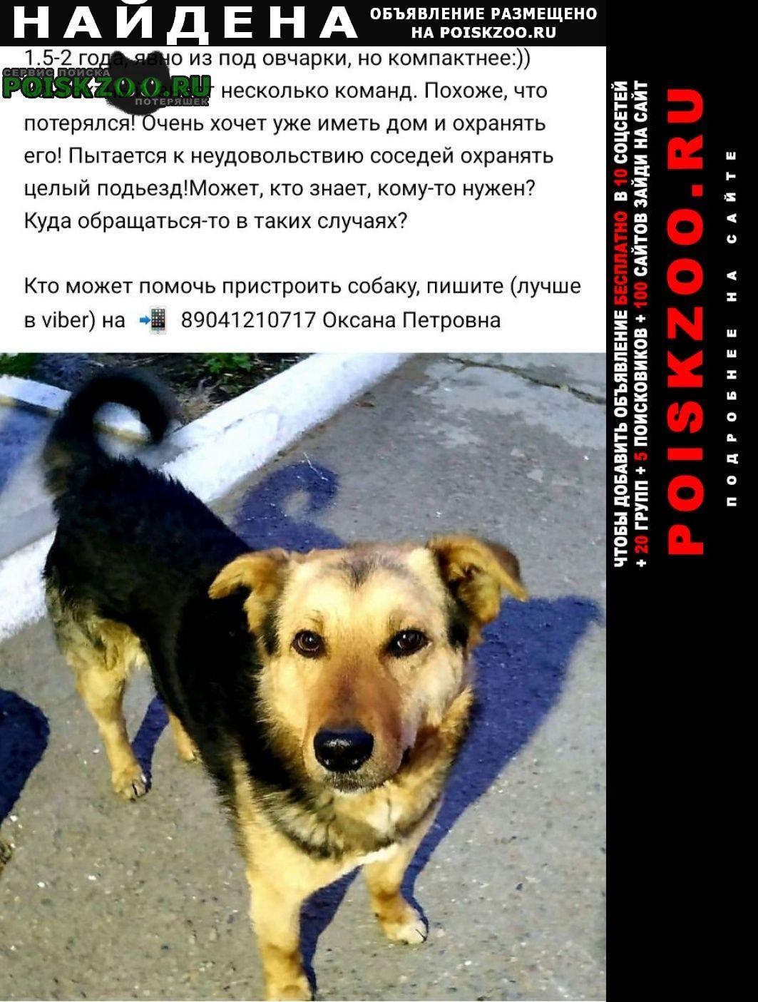Найдена собака кобель (п. молодежный) Иркутск