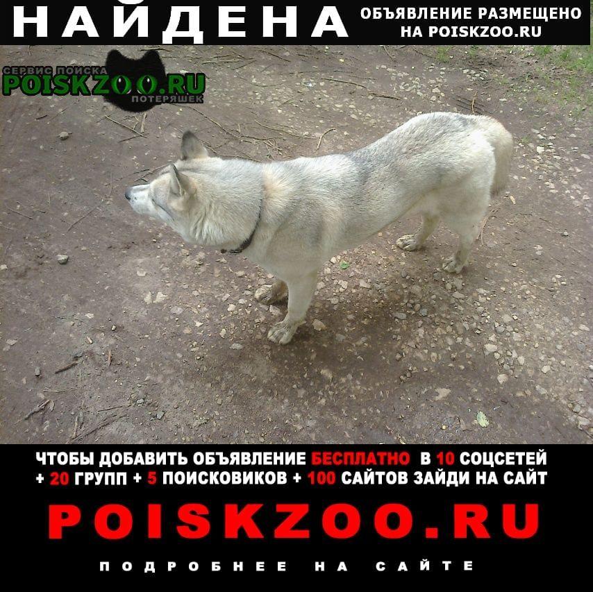 Найдена собака Богородск