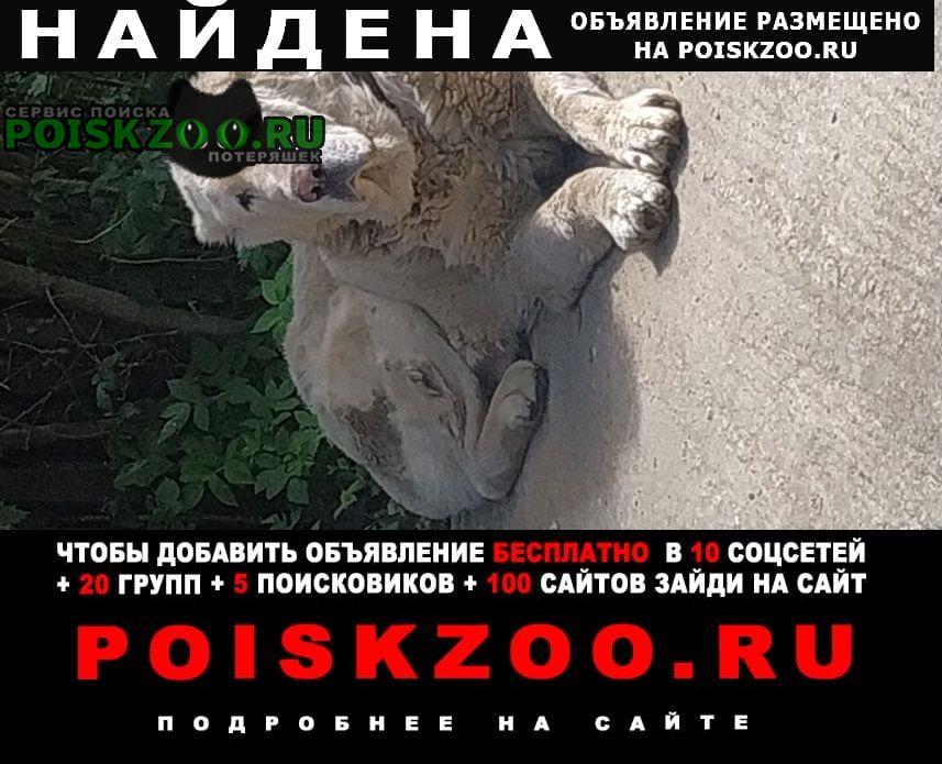 Найдена собака кобель парень алабай Дорохово