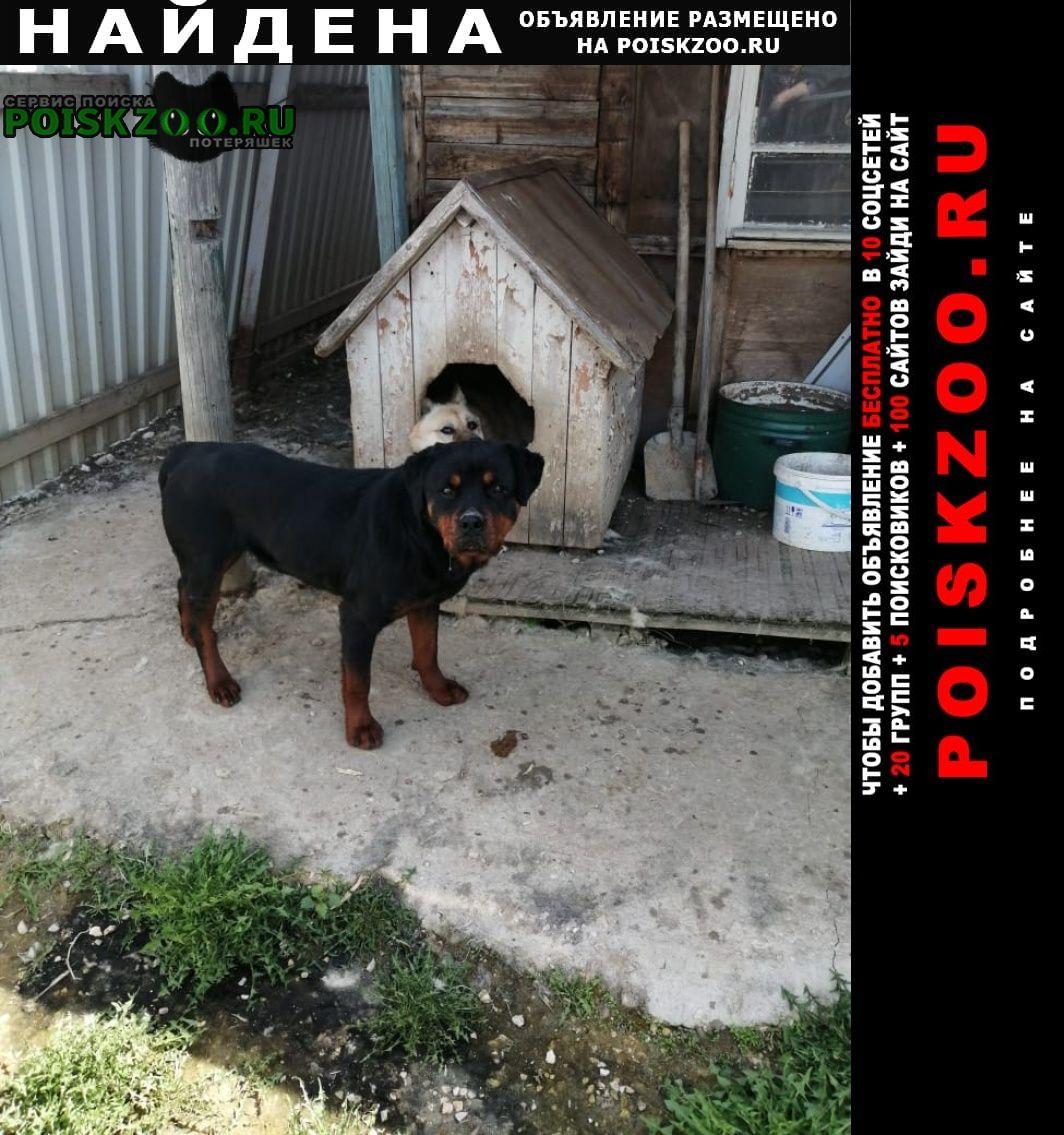 Найдена собака Белоусово