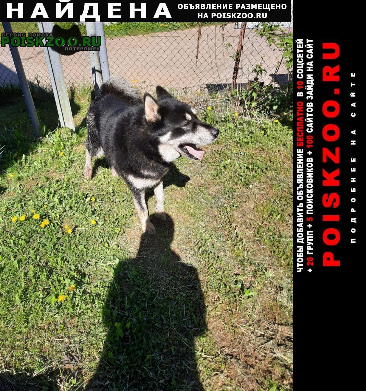 Найдена собака кобель Икша