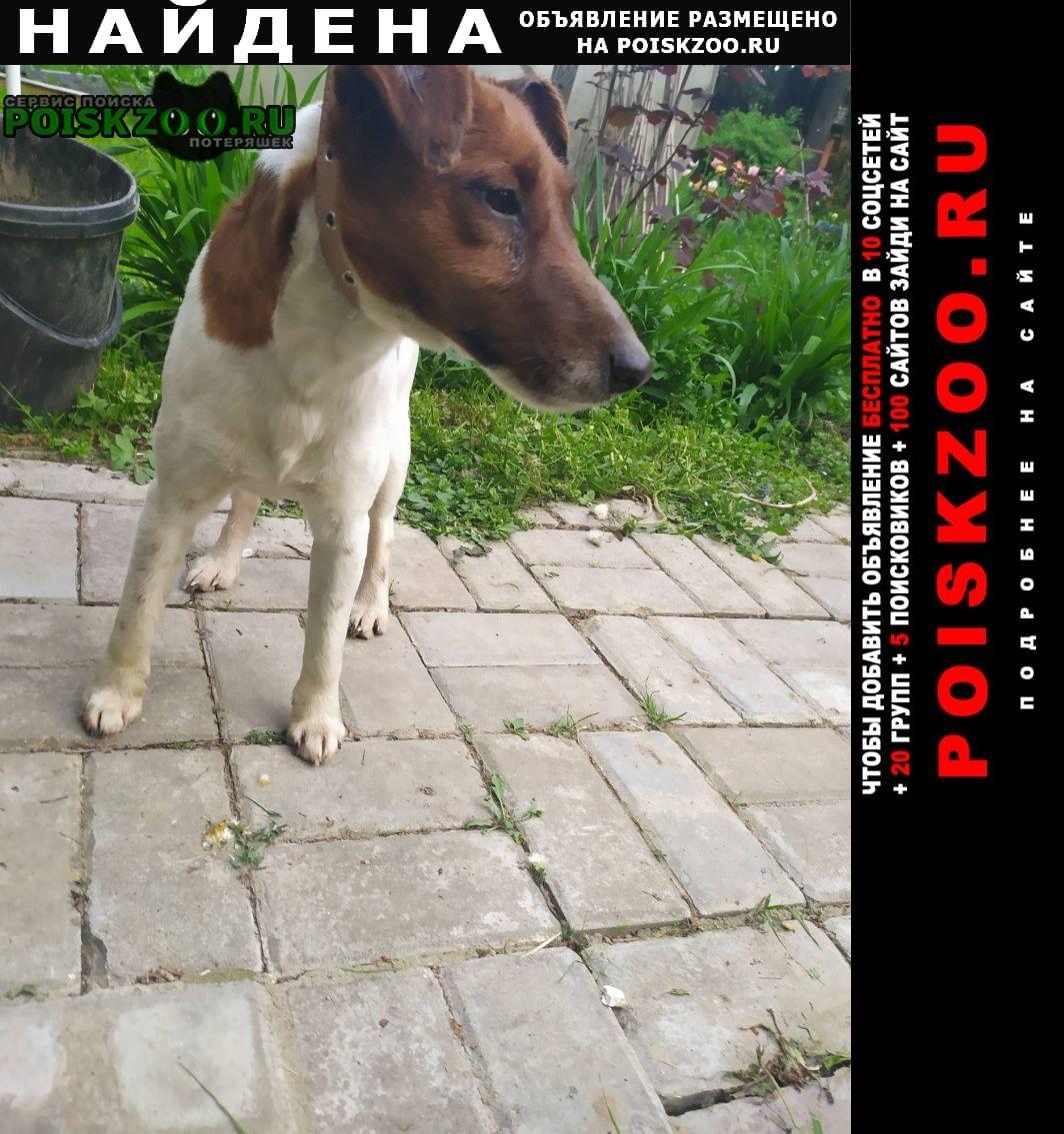 Найдена собака кобель Одинцово