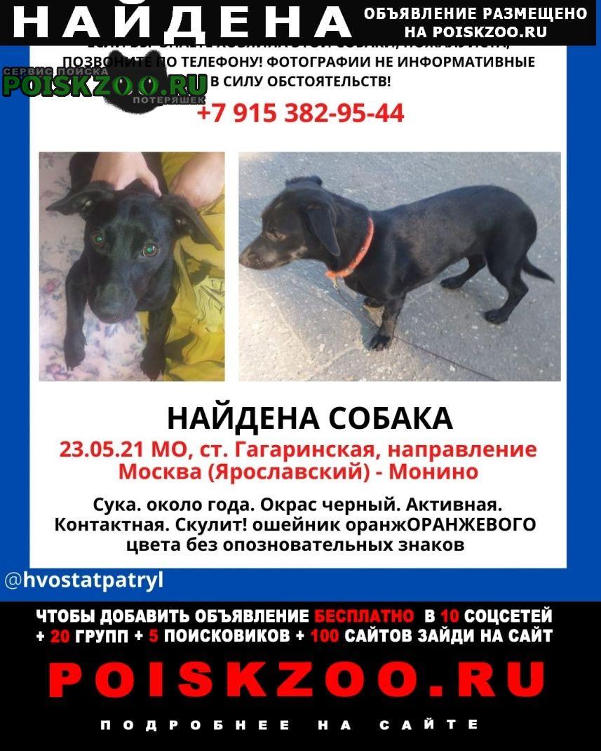 Найдена собака собаку долго у себя держать не можем хо Щелково