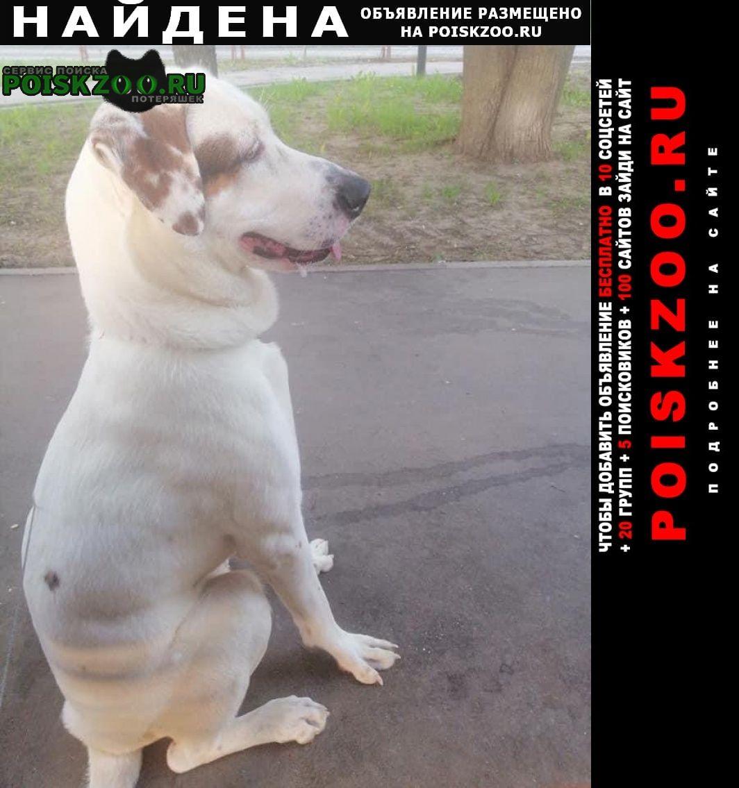 Найдена собака около м.беляево Москва