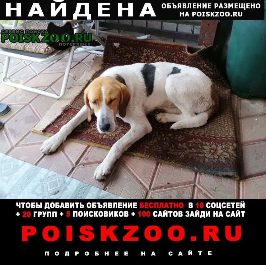 Найдена собака в ольше в деревне шеломец ул центральна Смоленск