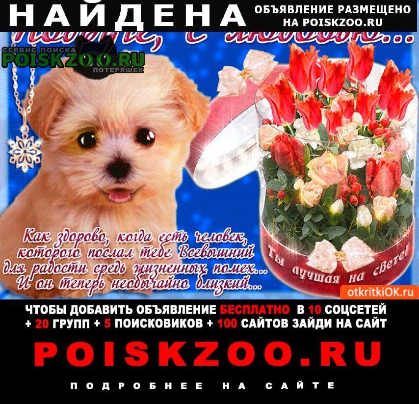 Найдена собака алабай Иваново