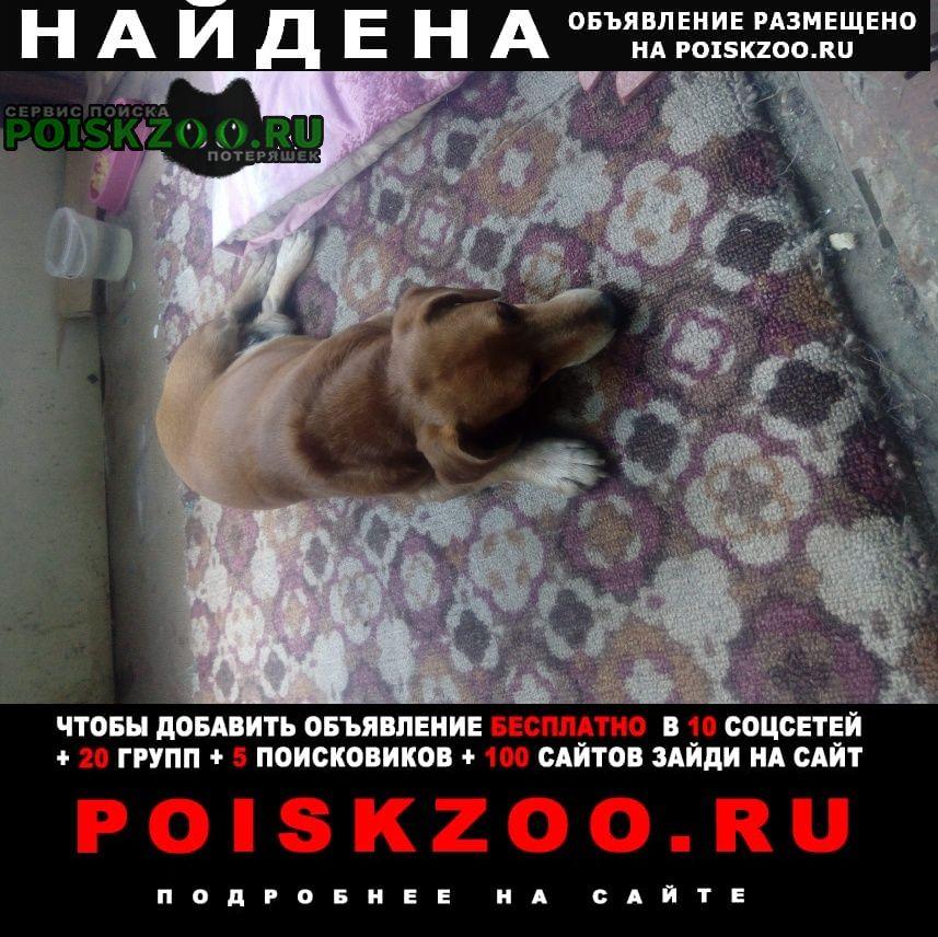 Найдена собака кобель Чебоксары