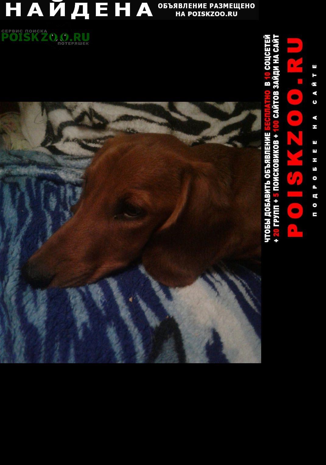 Найдена собака кобель такса рыжая Оренбург