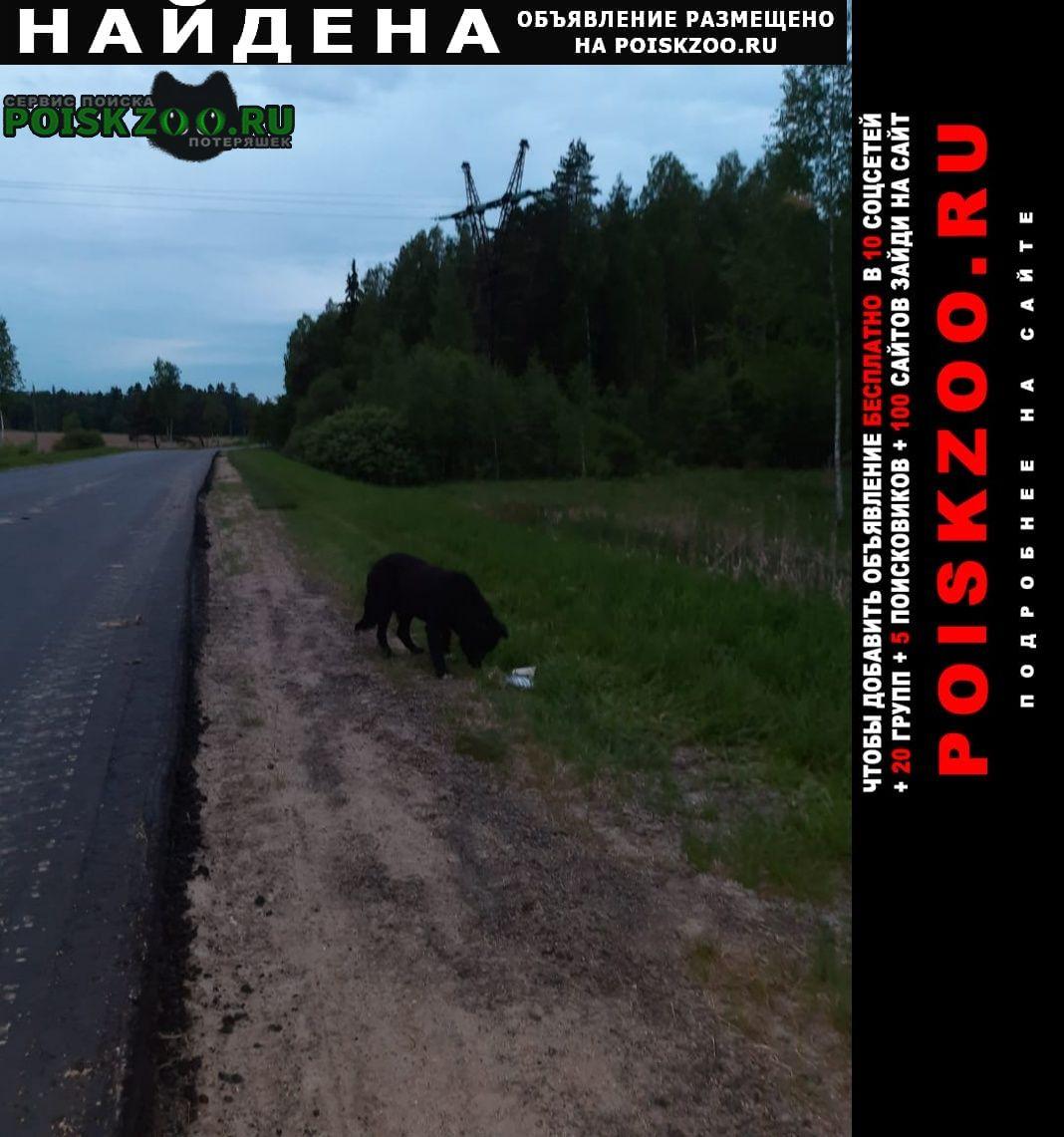 Найдена собака кобель чёрный с белой грудкой Ступино