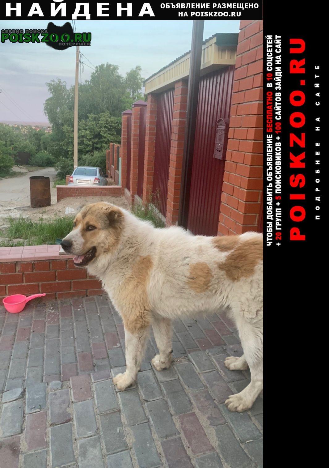 Найдена собака кобель молодой, алабай. Саратов