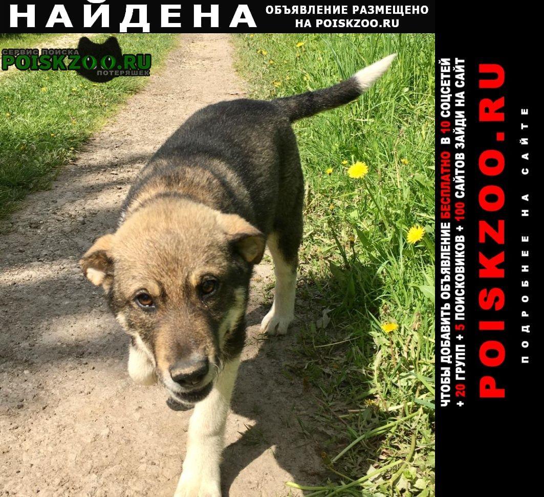 Найдена собака кобель очень нужен хозяин Тула
