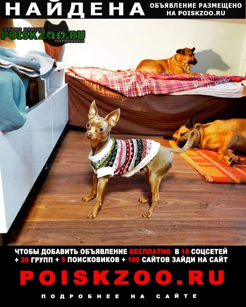 Найдена собака кобель русский той Москва