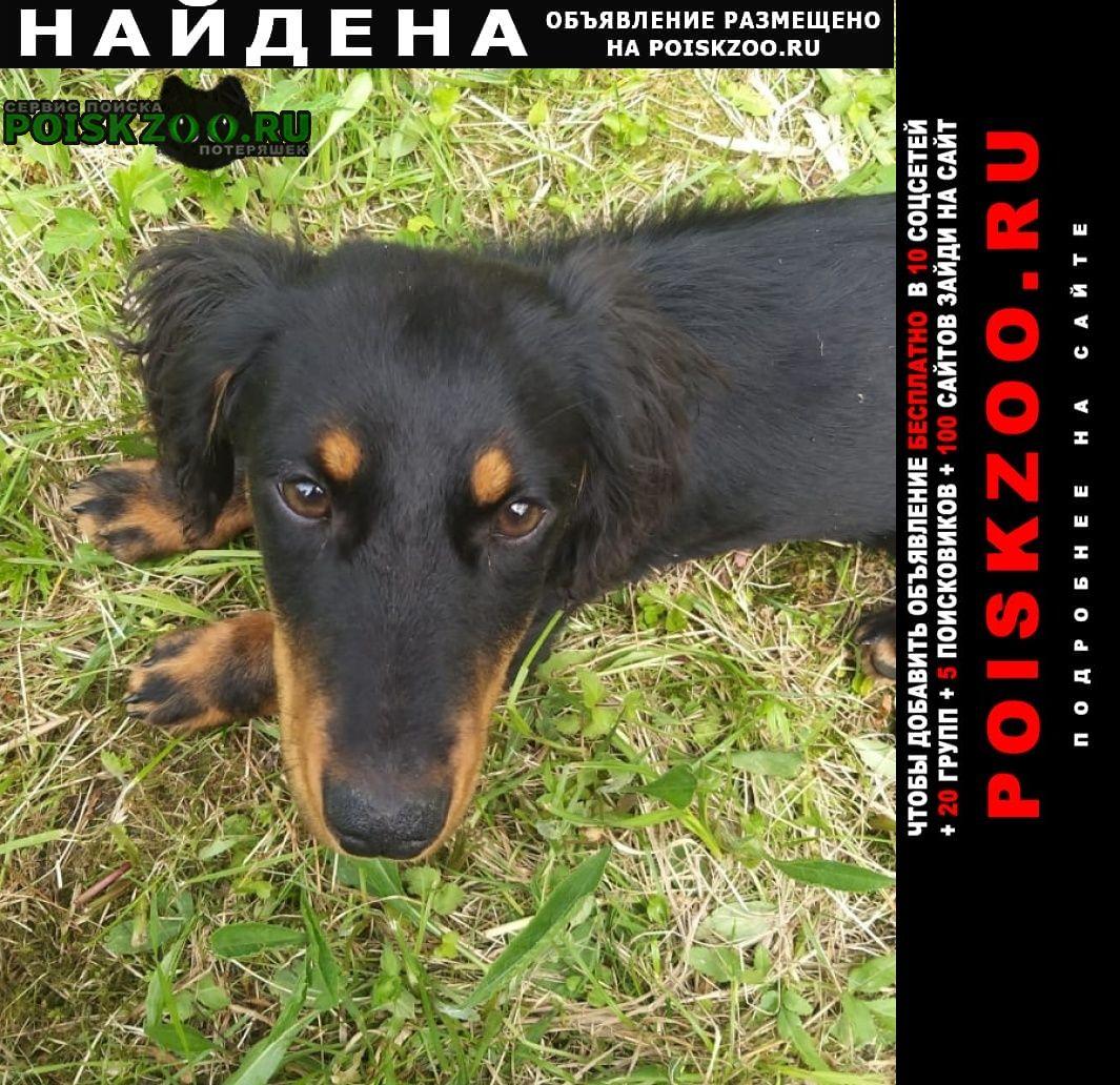 Найдена собака кобель такса Нарофоминск