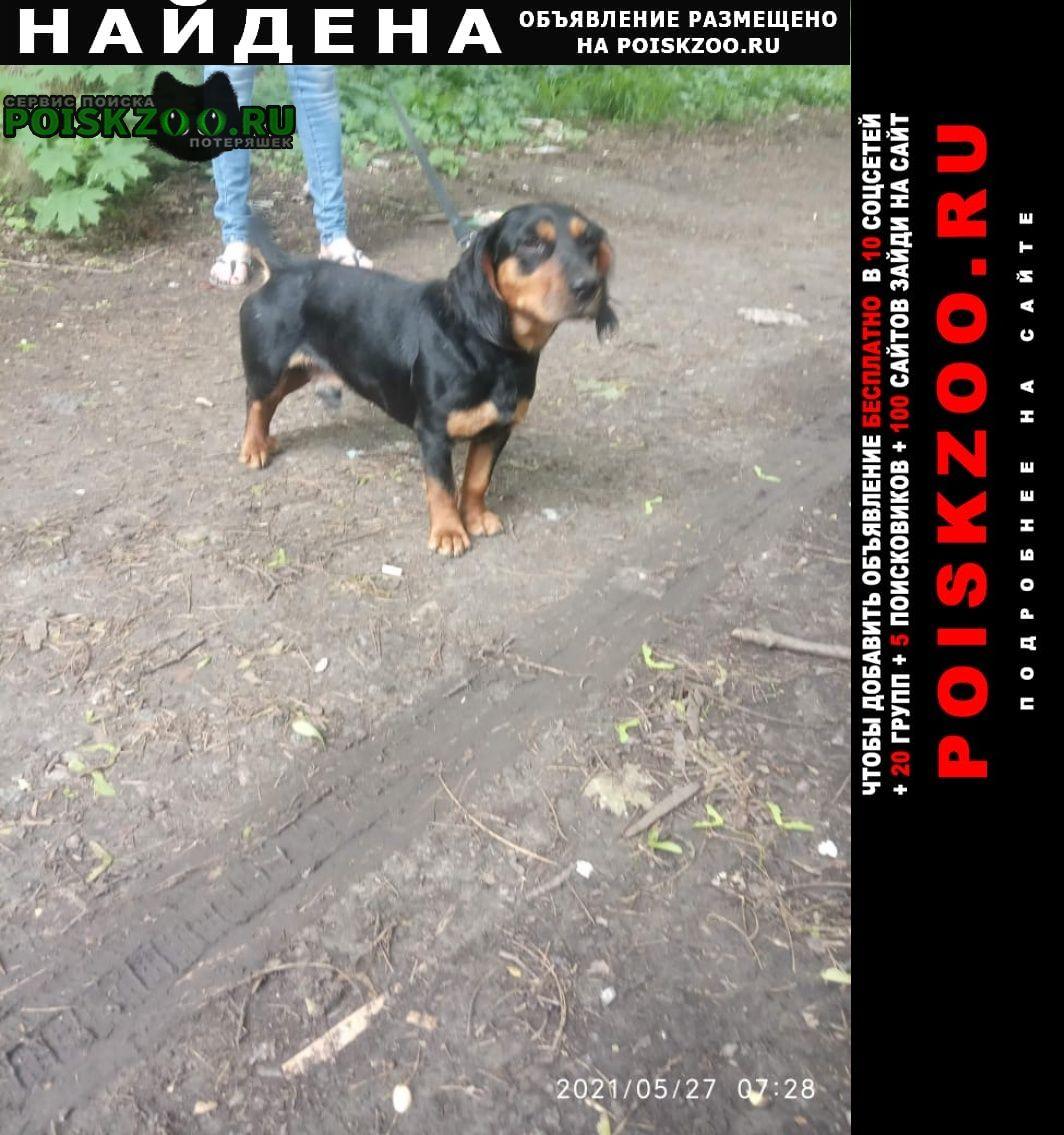 Найдена собака кобель таксы Ростов-на-Дону