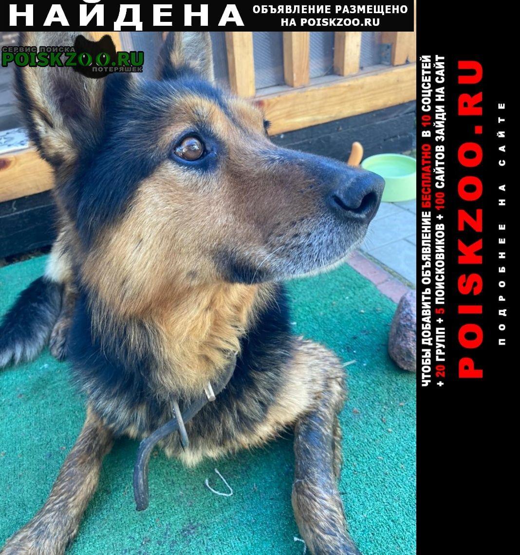 Найдена собака кобель Фряново