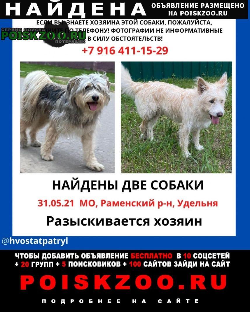 Найдена собака кобель два кобеля Раменское