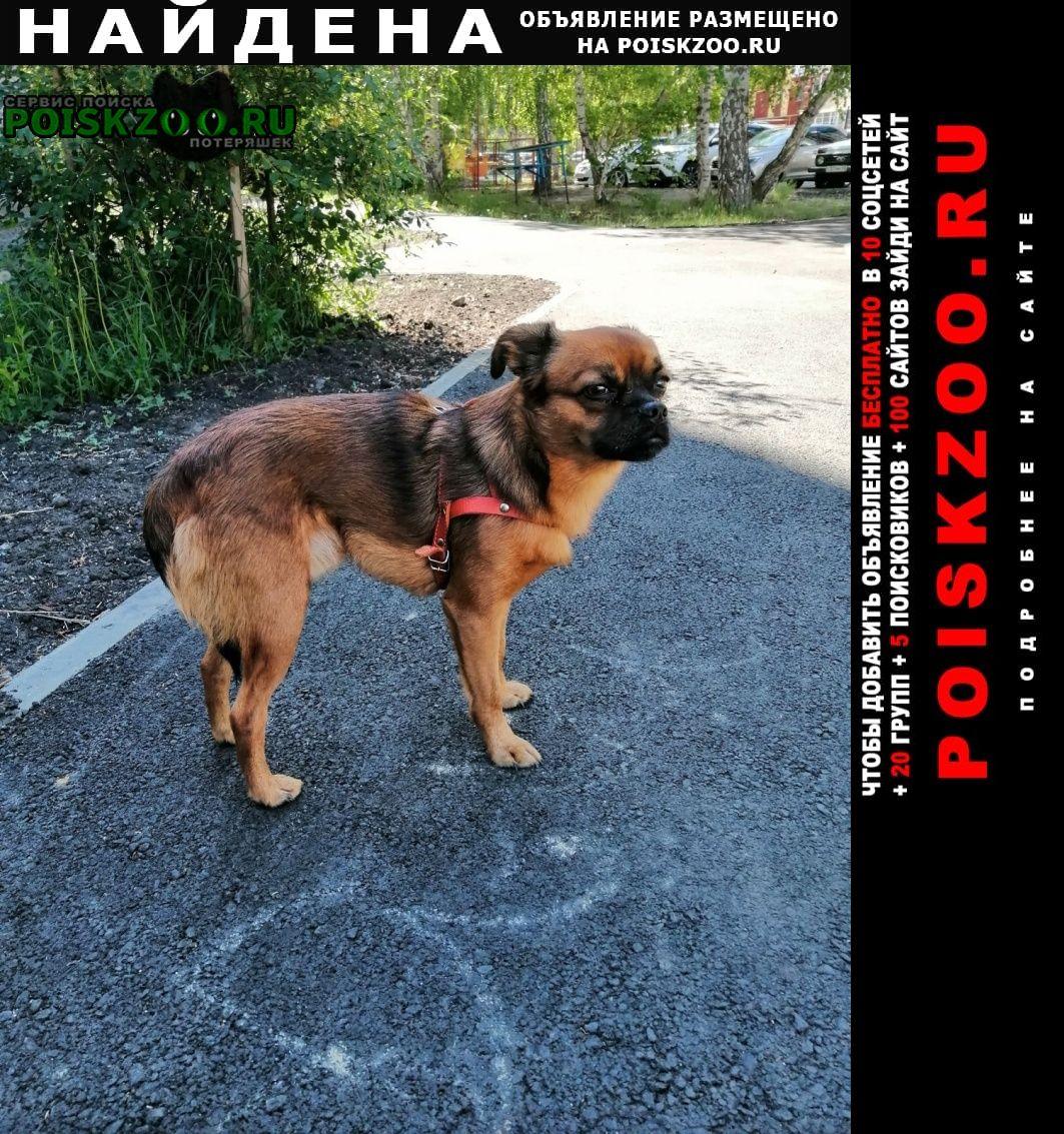 Найдена собака кобель маленькая коричневая Курган