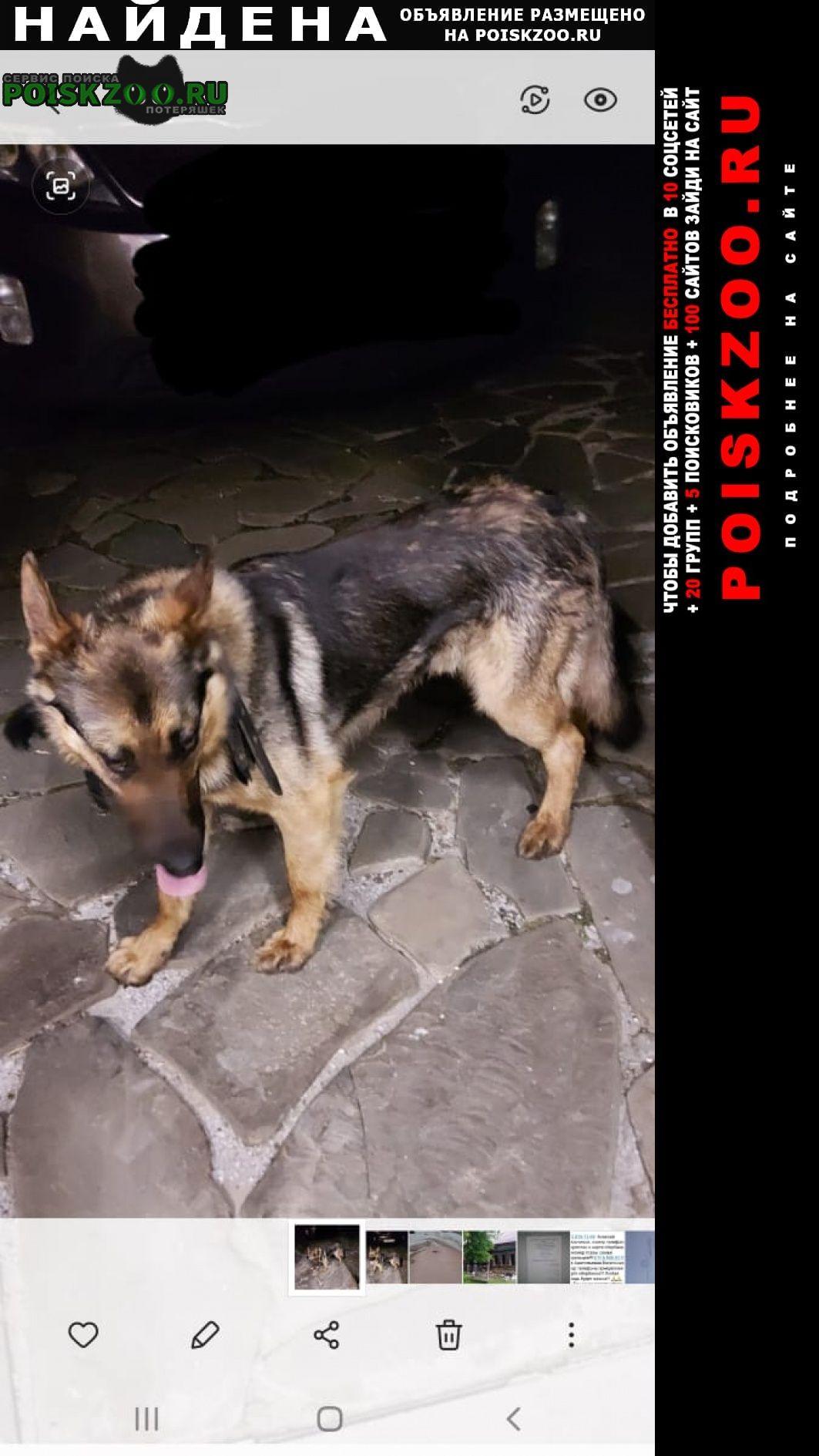 Найдена собака кобель Зарайск