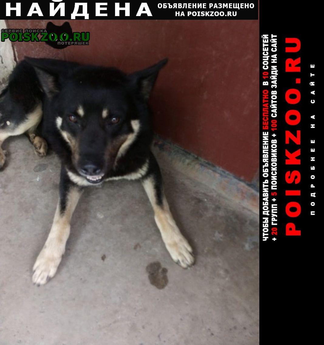 Найдена собака кобель немецкая овчарка черная подпадая Ростов-на-Дону