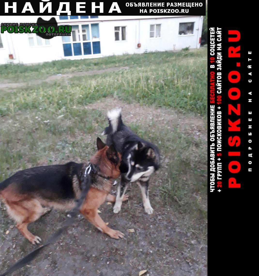 Найдена собака кобель Екатеринбург