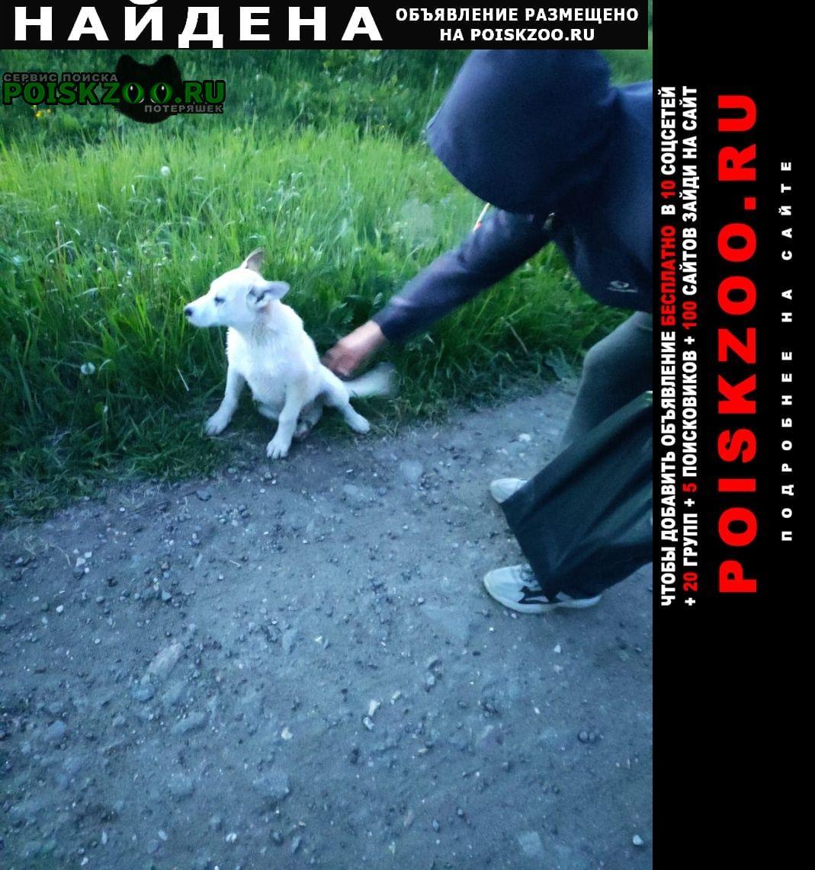 Найдена собака Можайск