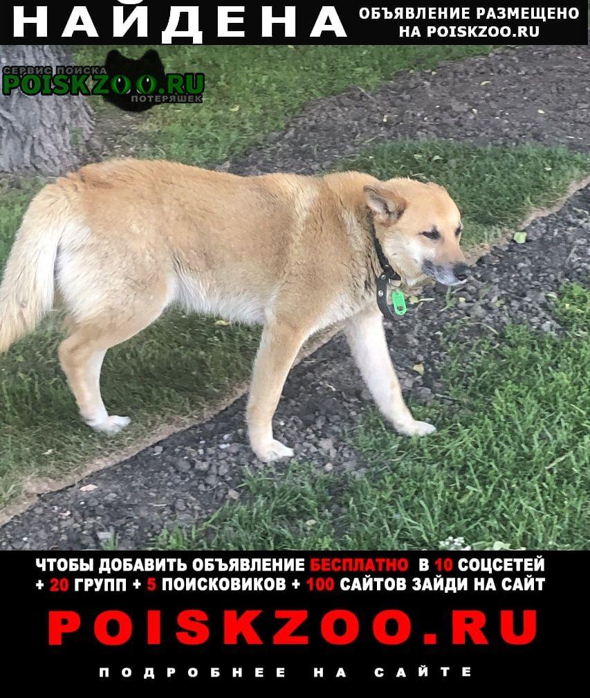 Найдена собака Москва