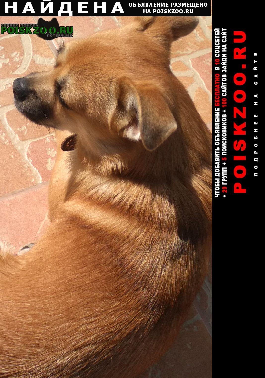 Найдена собака Челябинск