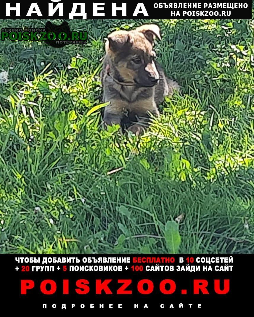 Найдена собака щенок, девочка Москва