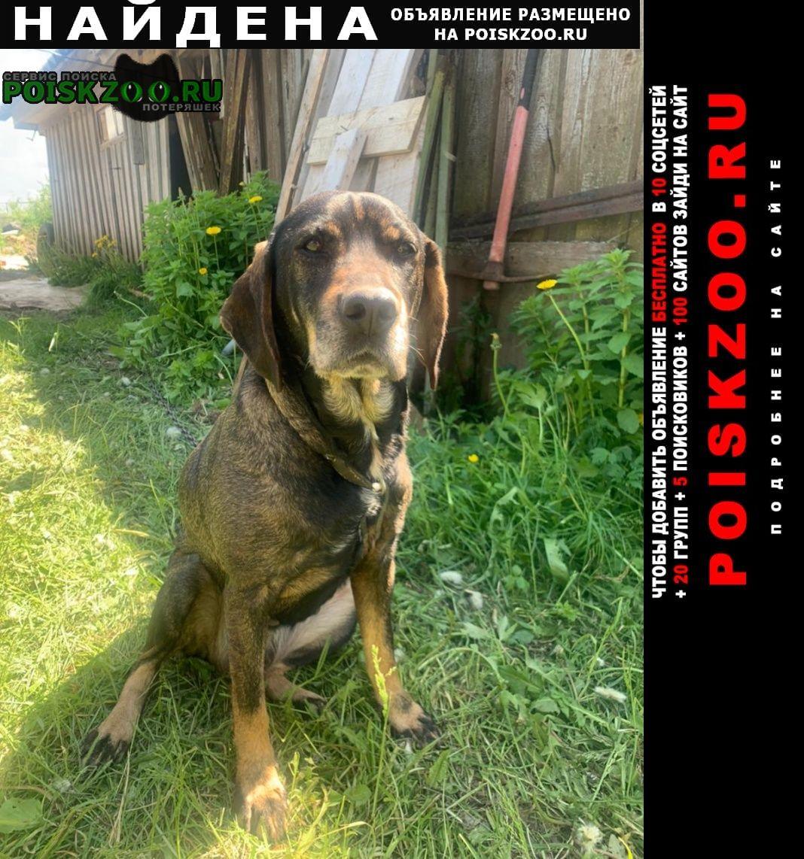 Найдена собака в деревне марьино Конаково