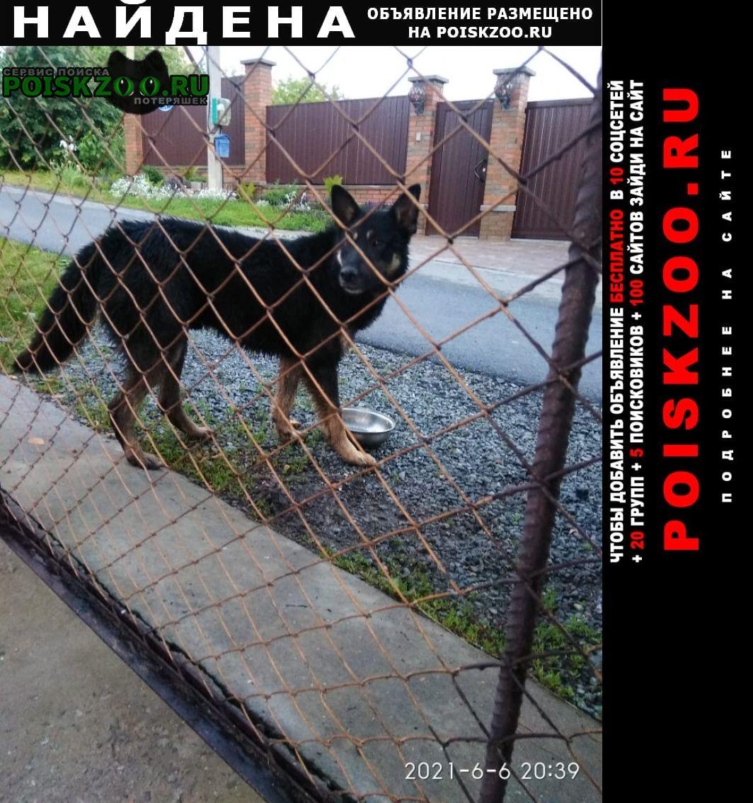 Найдена собака кобель чёрной овчарки Белгород