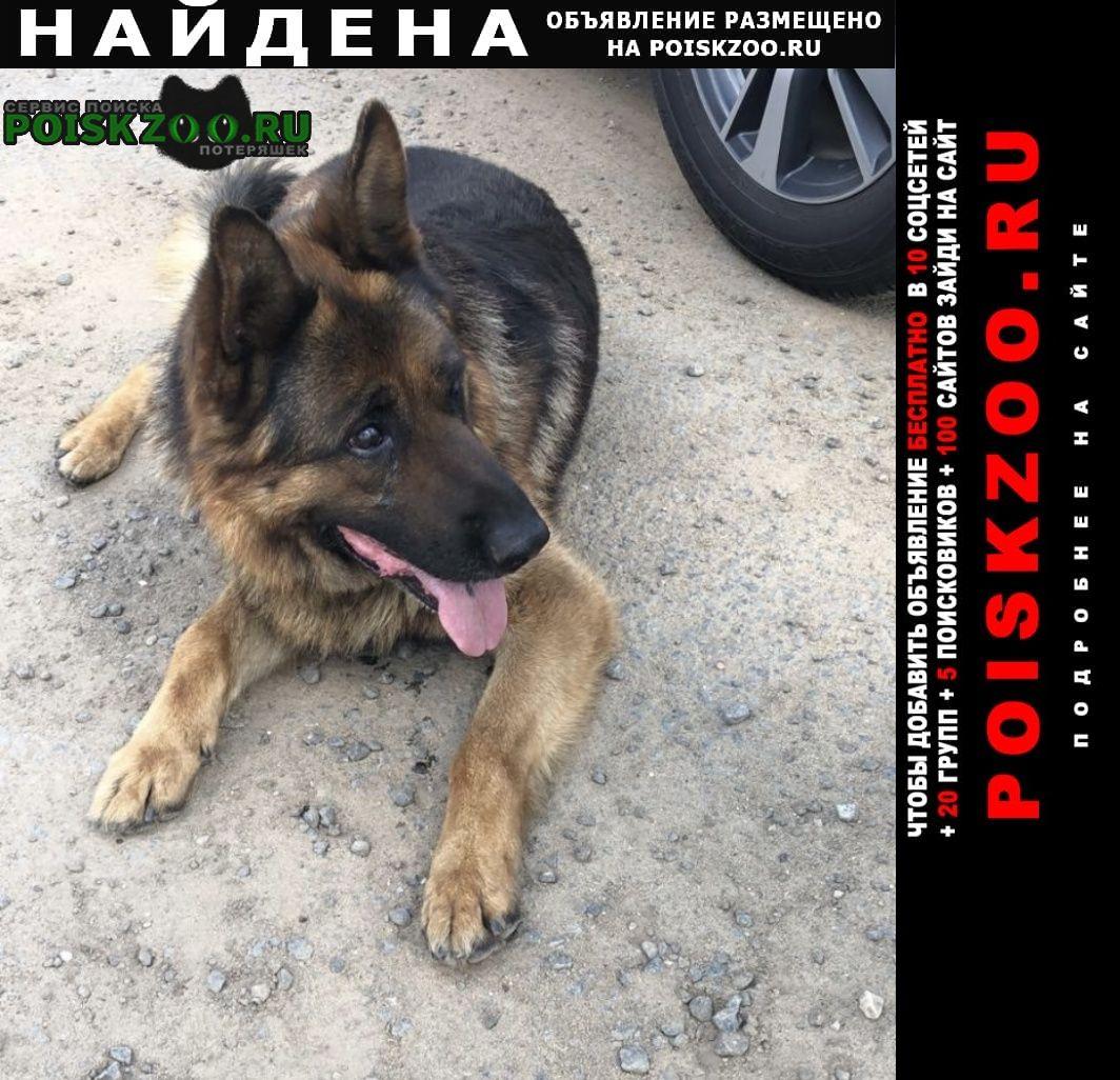 Найдена собака кобель Люберцы