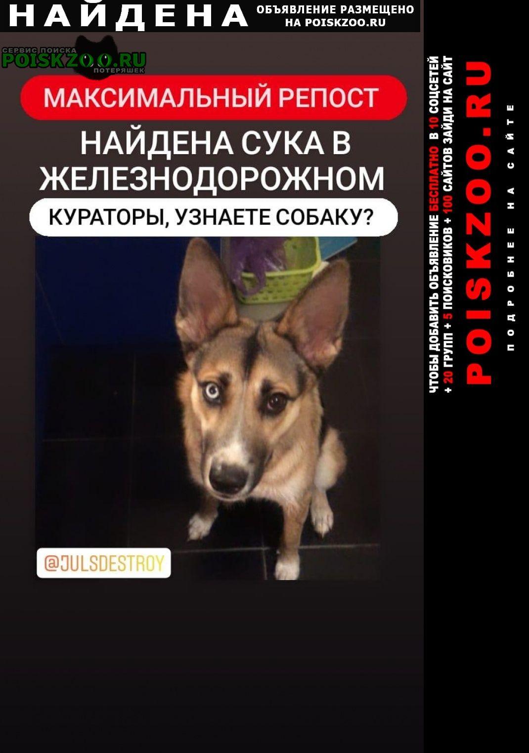 Найдена собака Железнодорожный (Московск.)