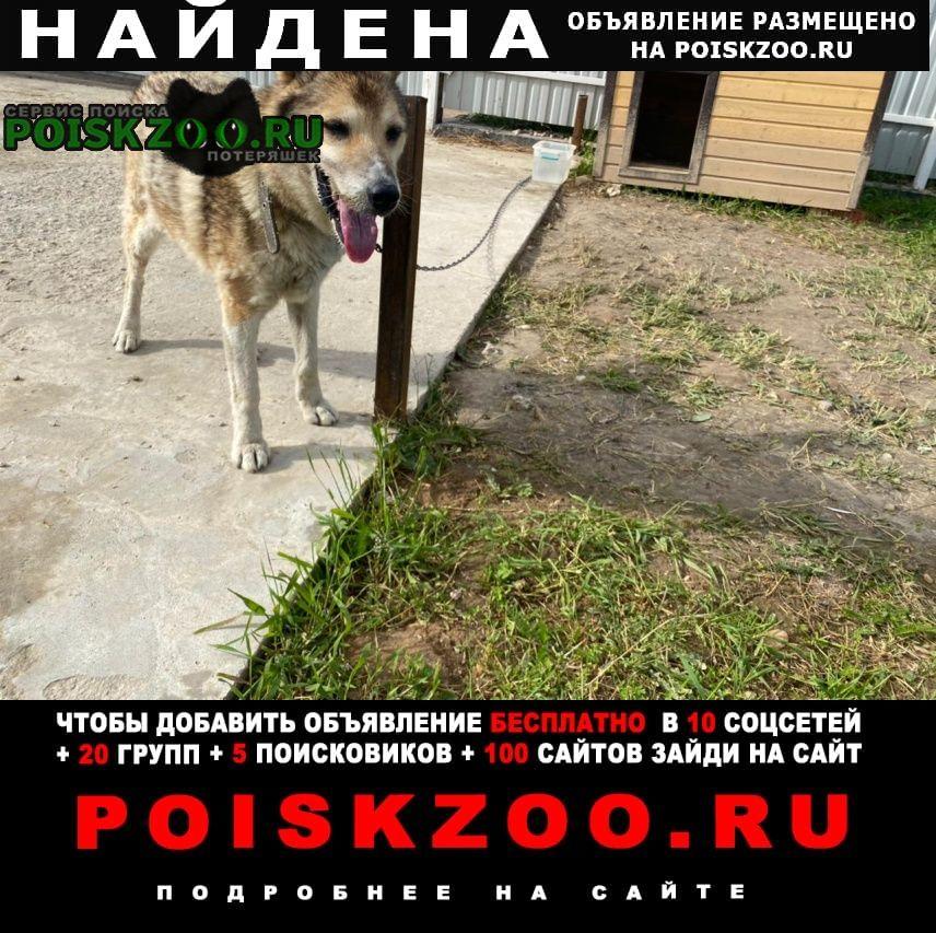 Найдена собака Малоярославец