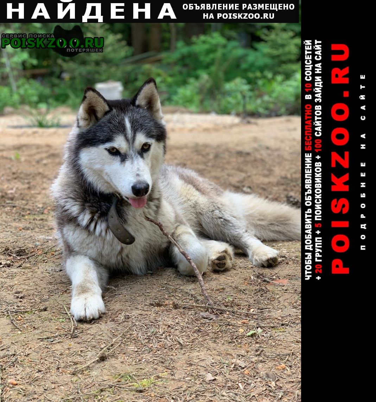 Найдена собака Апрелевка