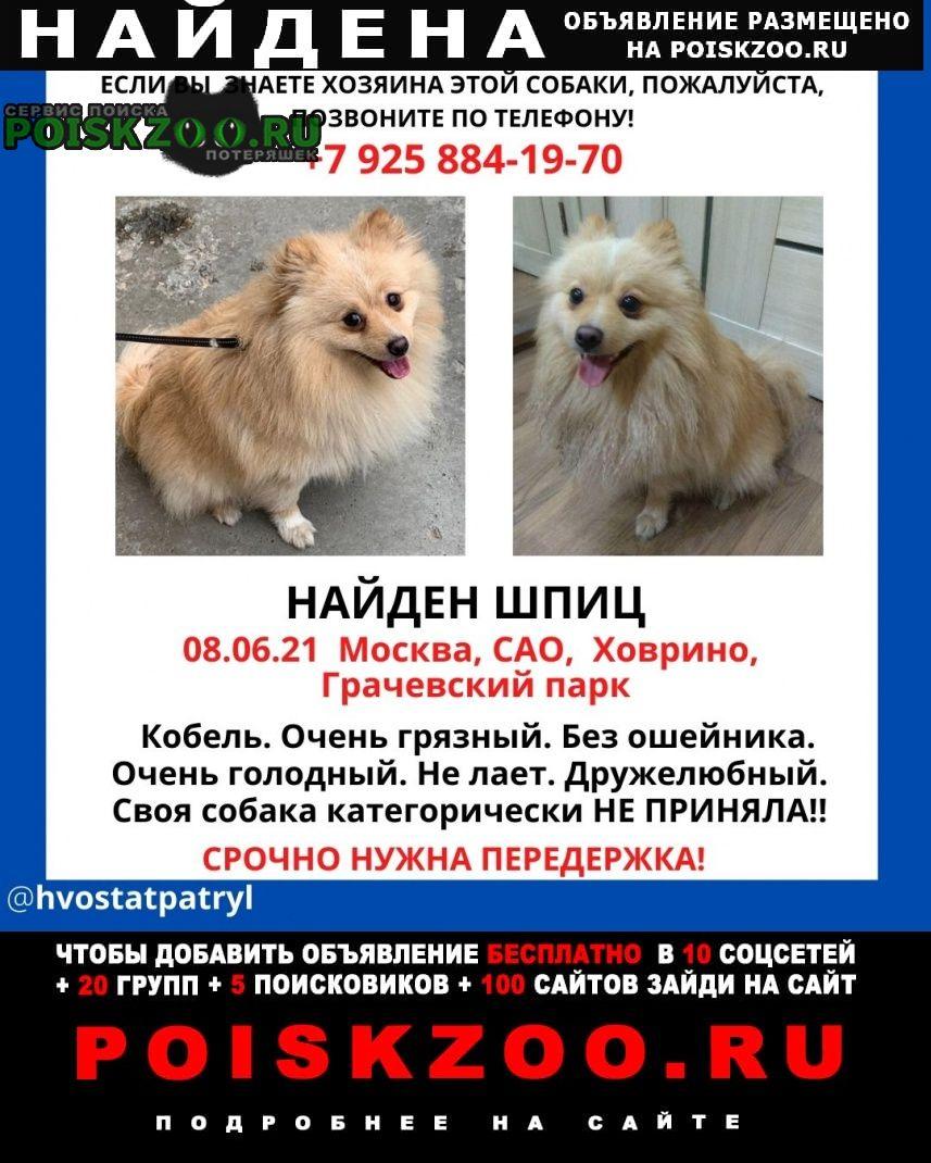 Найдена собака кобель шпиц Москва