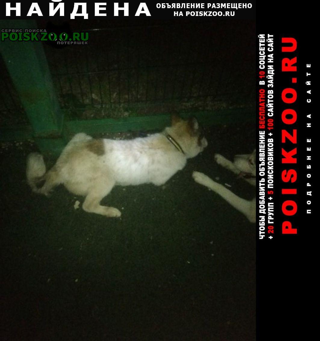 Найдена собака кобель Тольятти