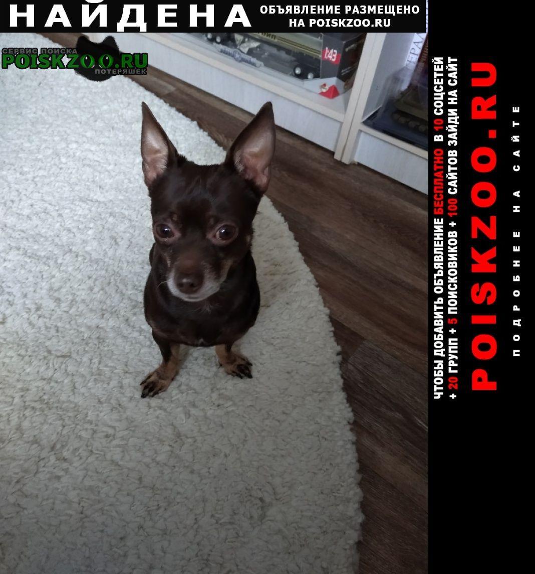 Найдена собака кобель Копейск