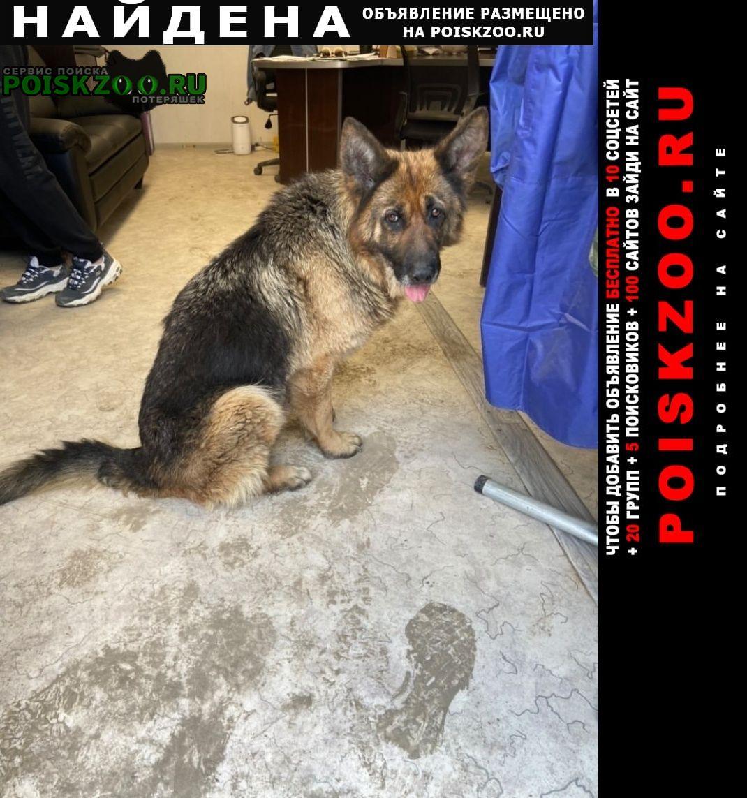 Найдена собака Аксай (Ростовская обл.)