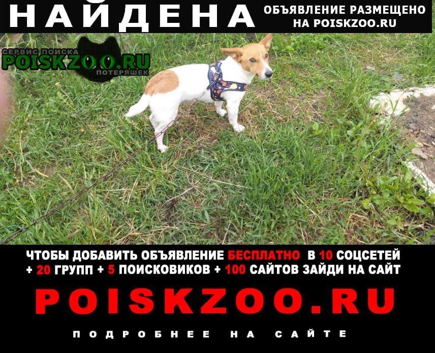 Найдена собака Павловский Посад