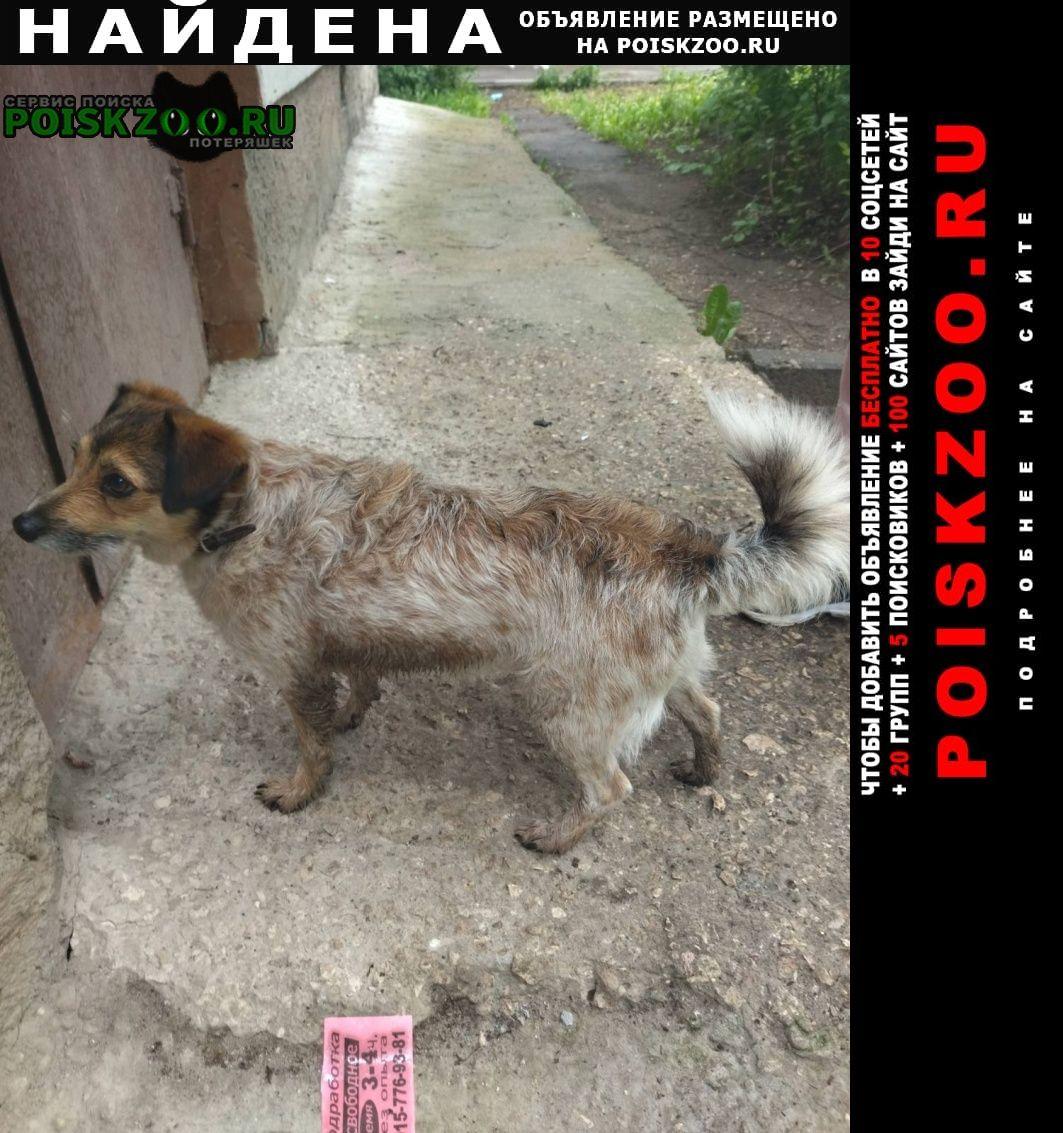 Найдена собака небольшая, палевого цвета с коричн Владимир