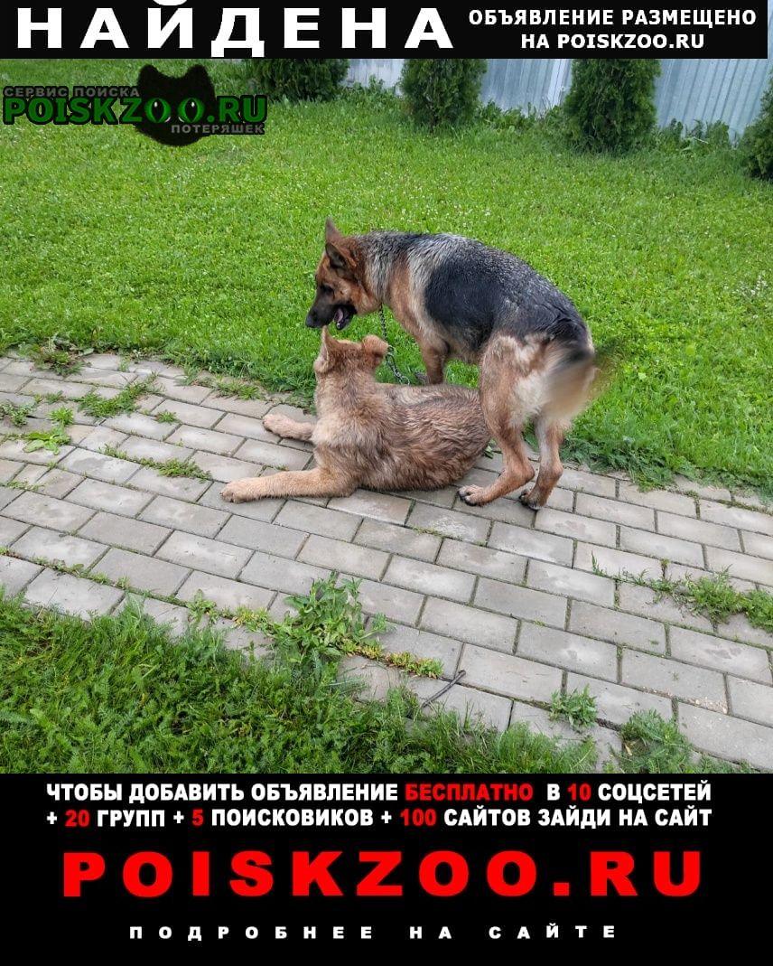 Чехов Найдена собака сука немецкой овчарки со щенком