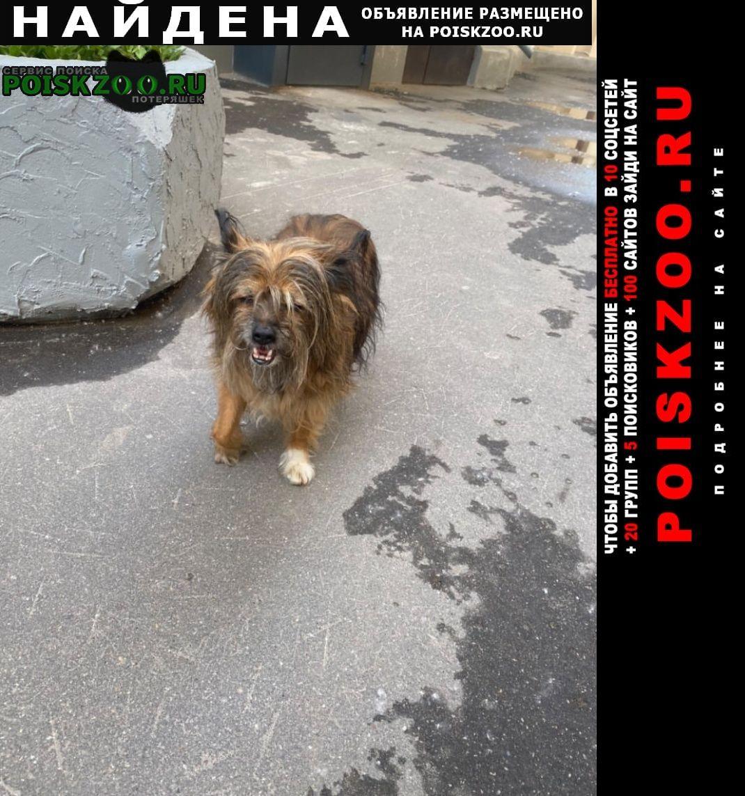 Найдена собака кобель земляной вал 21 собачка Москва