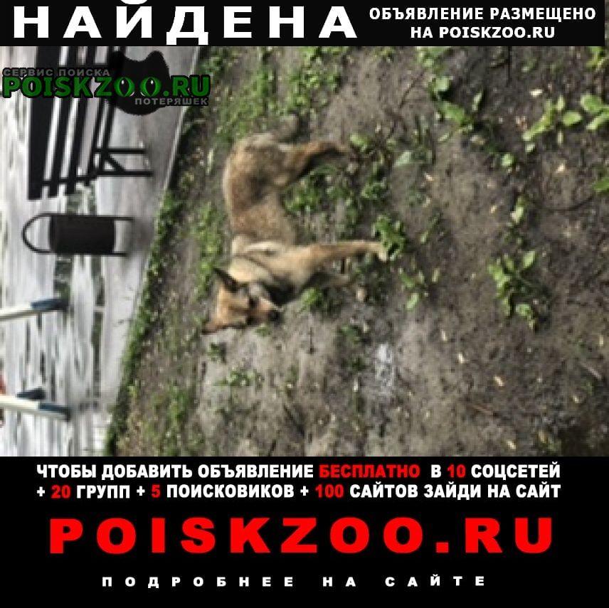 Найдена собака в новогиреево Москва